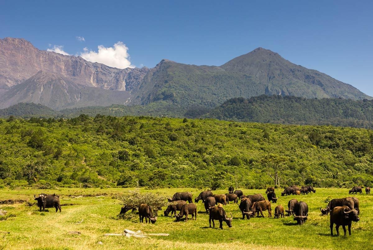 Animaux-dans-Parc-National-Arusha
