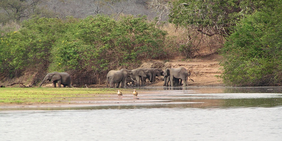 Elephant-dans-Réserve-de-Selous