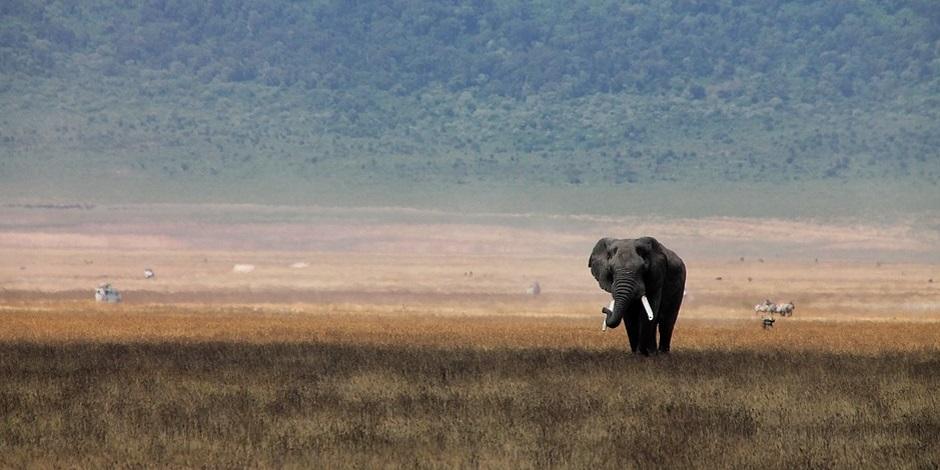 Elephant-en-Tanzanie