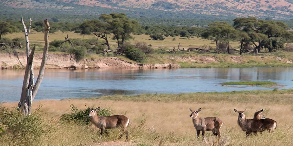 Parc-National-de-Ruaha