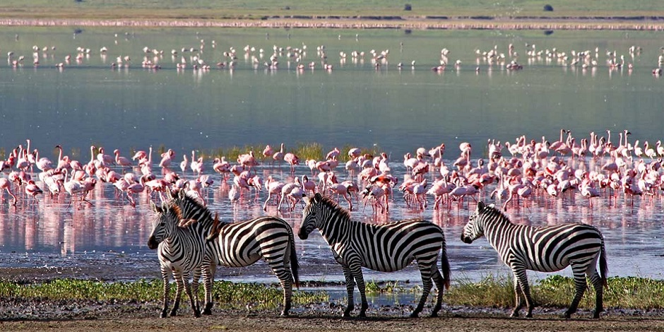 Zebres-et-flamands-roses-Ngorongoro-Crater-Tanzanie