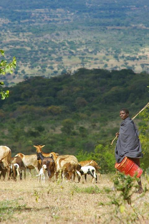 Combiné Tanzanie - Kenya en 16 jours