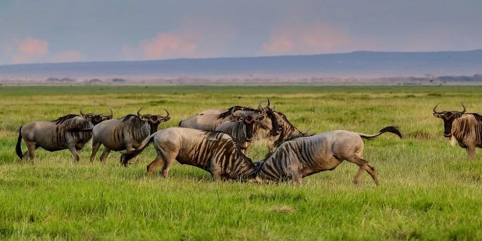 Combiné Namibie - Botswana