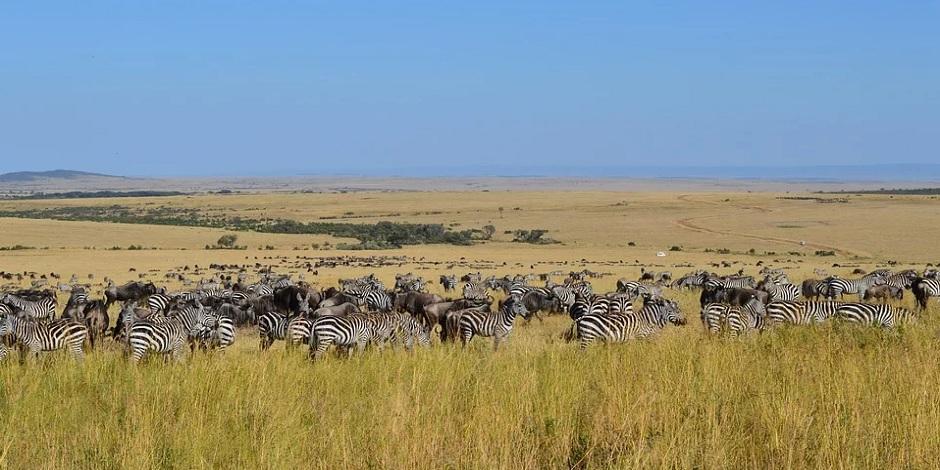 Prairie du Masai Mara
