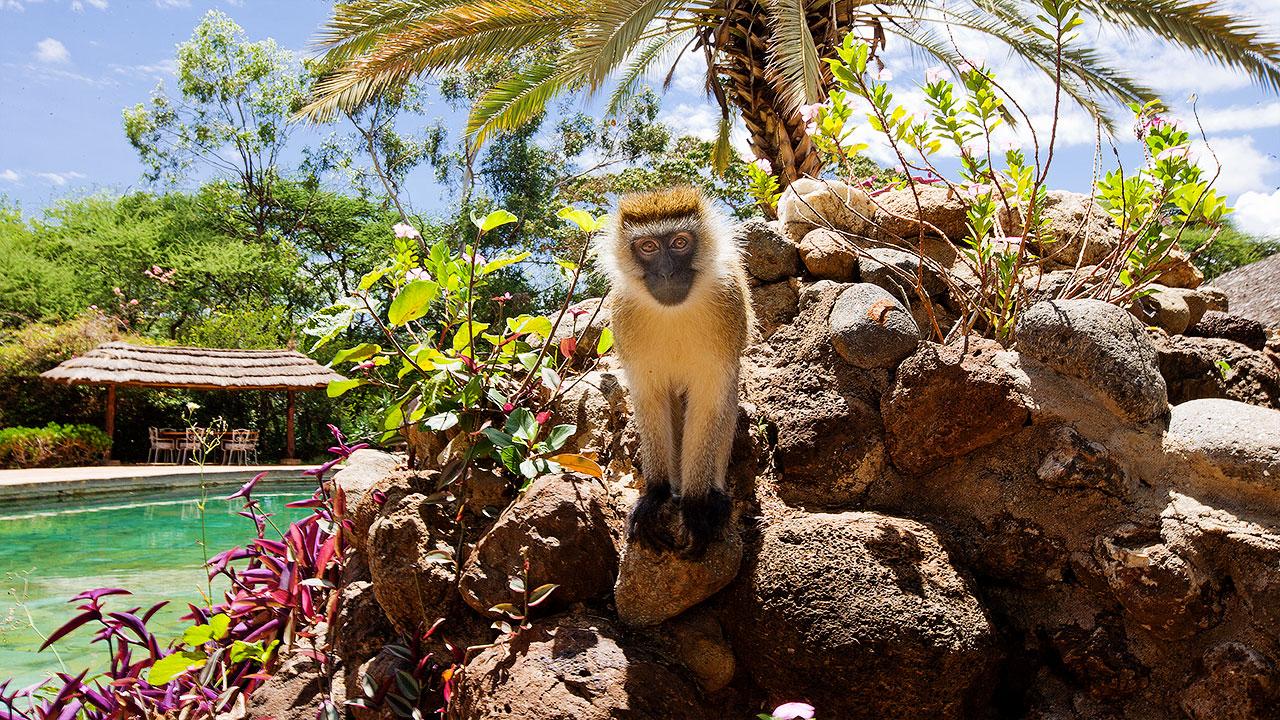 Voyage de noce au Kenya