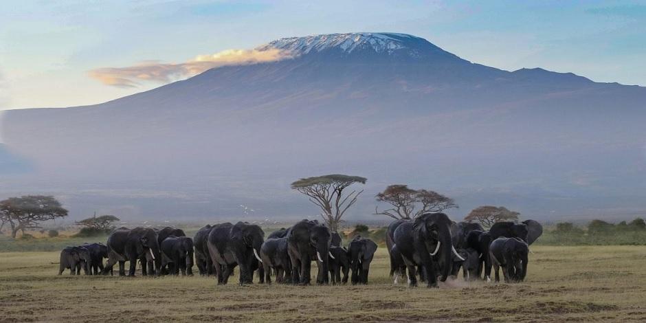 Une famille d'éléphant dans le parc national d'Amboseli