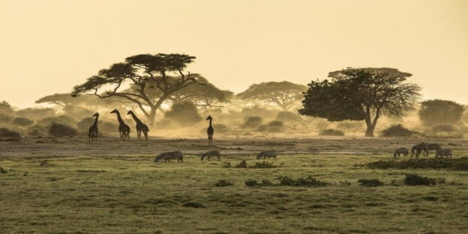 La faune, riche et variée du Kenya