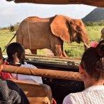 Safari privé au cœur du Kenya