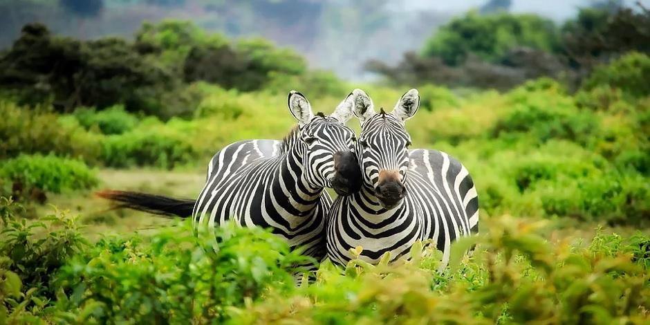Le Kenya, une terre de passion
